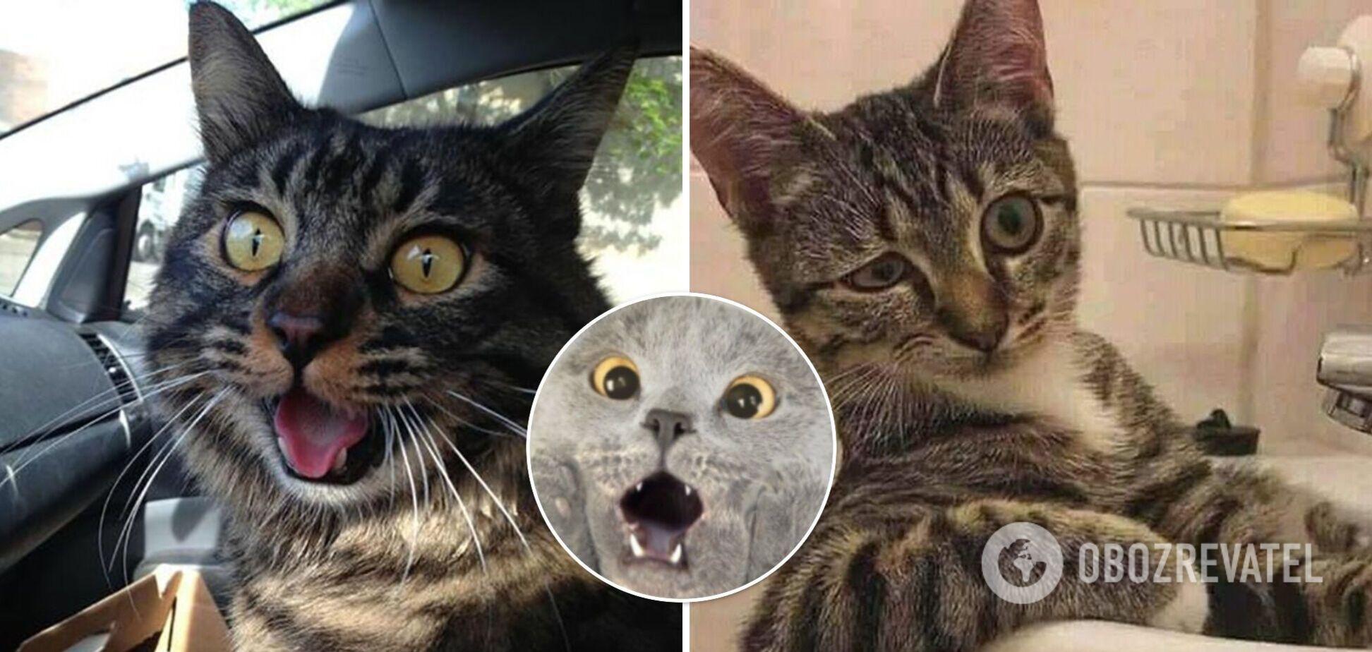Коты позируют на камеру