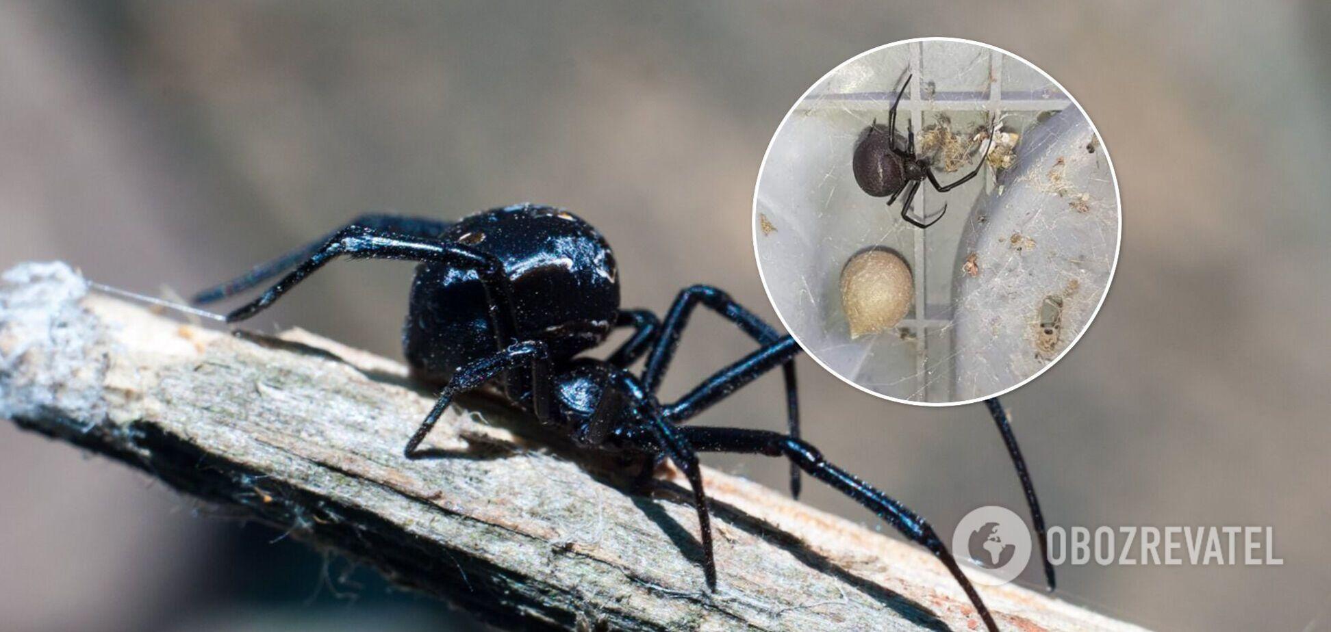 Житель Измаил обнаружил во дворе опасного паука