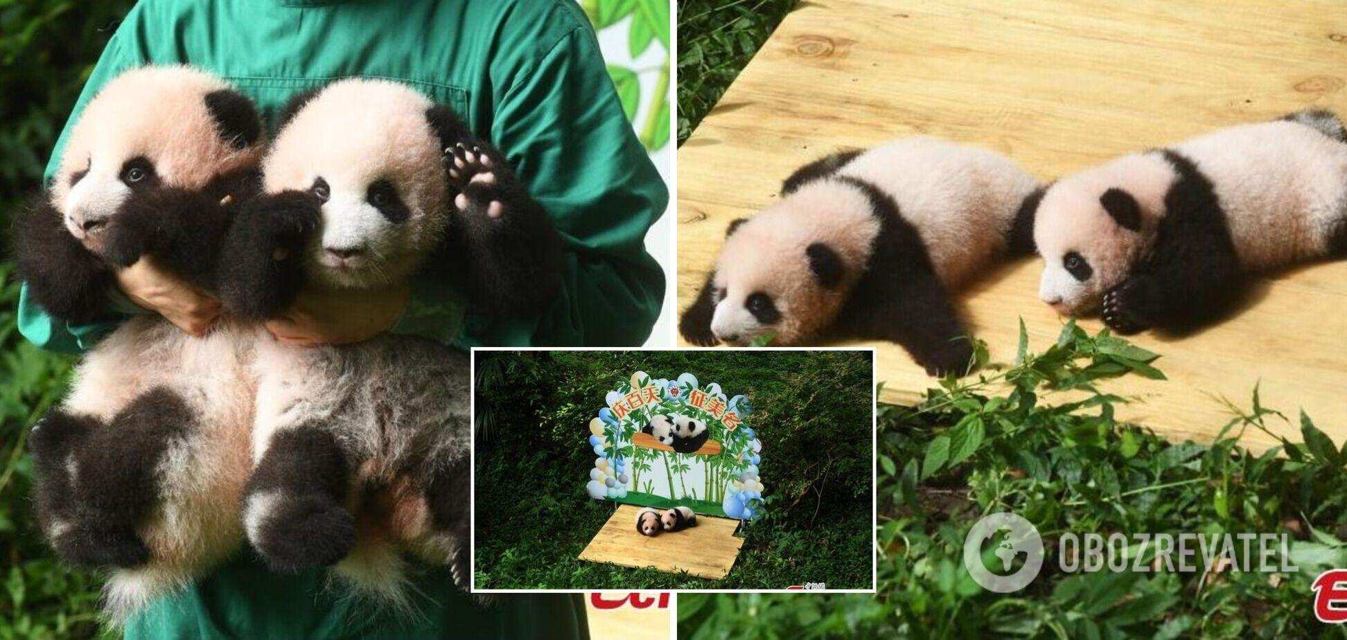 Пандам-близнецам в зоопарке Китая исполнилось 100 дней
