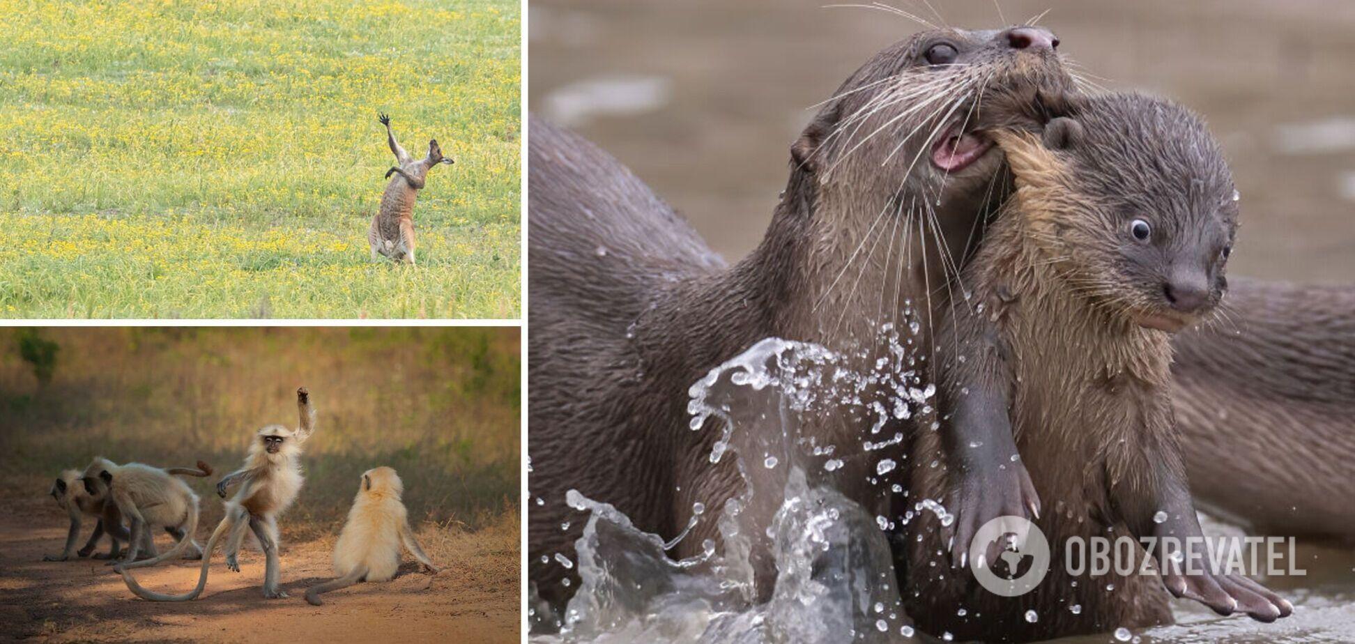 Как ведут себя животные в дикой природе