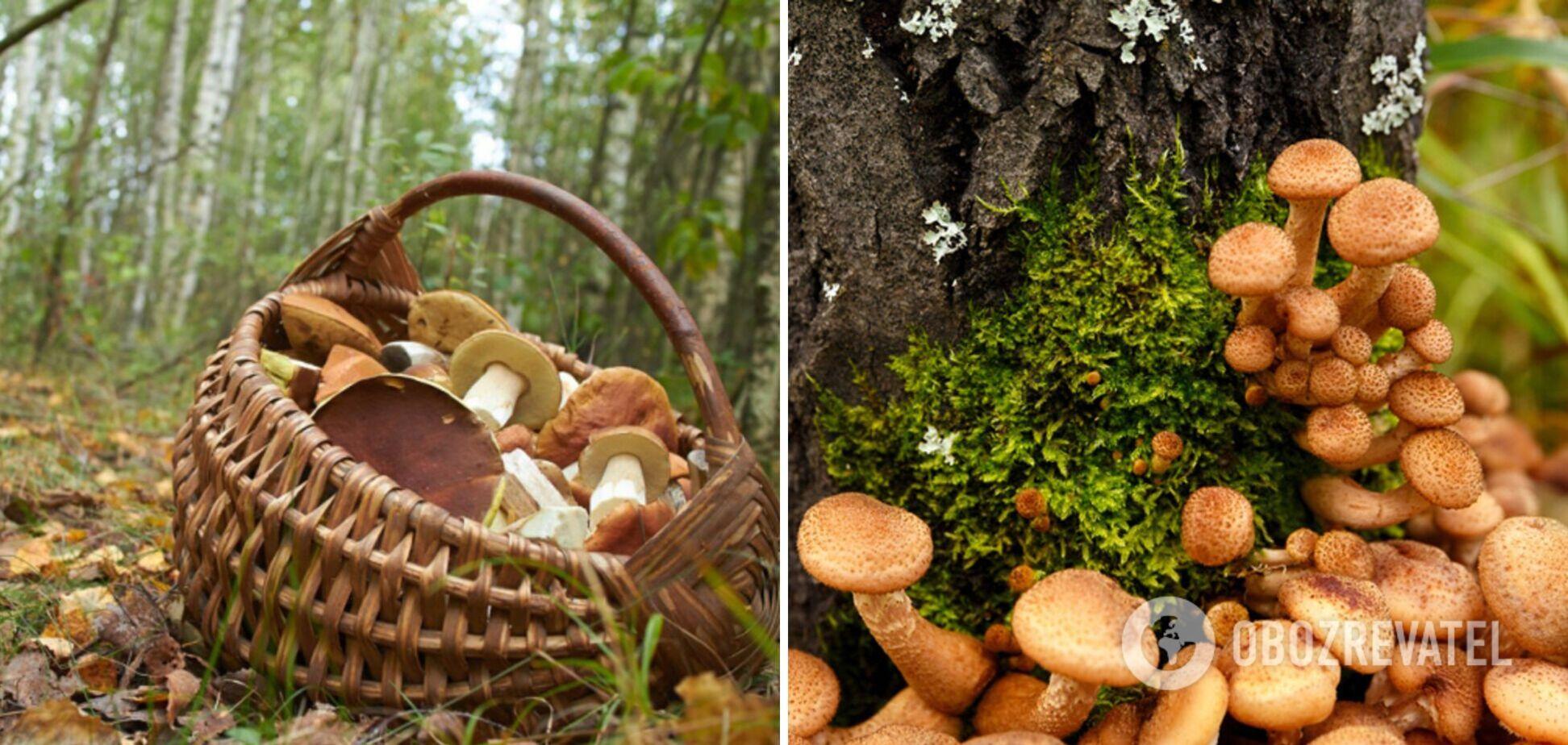 Как не испортить опята: правильная подготовка грибов