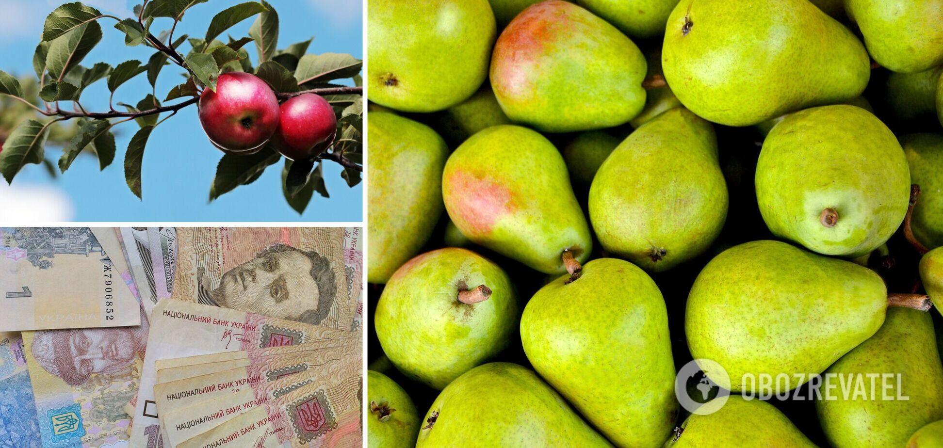 Цены на ягоды и яблоки в Украине снизились, груши – дорогие: сколько стоят фрукты