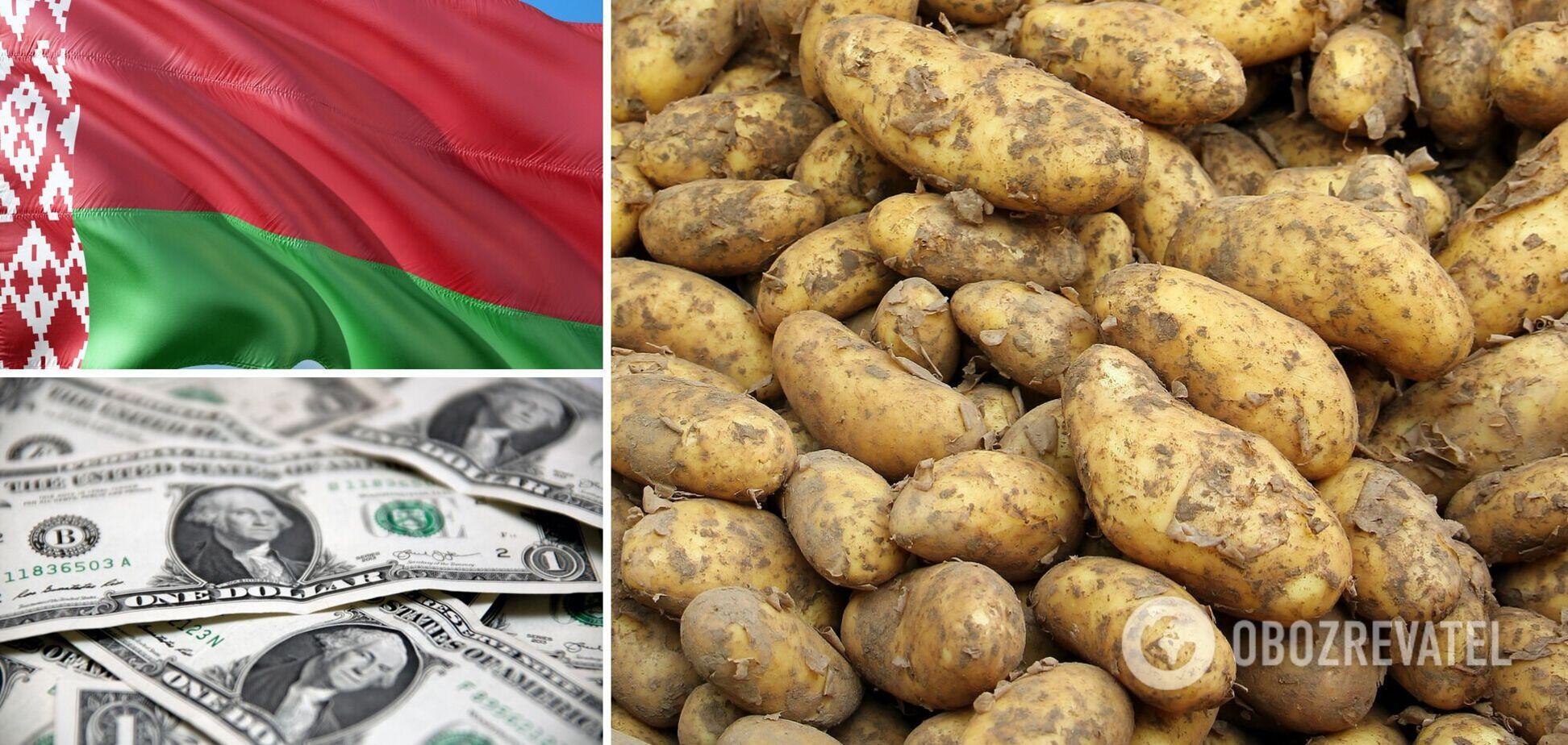 Білорусь скуповує українську картоплю під час збирання врожаю