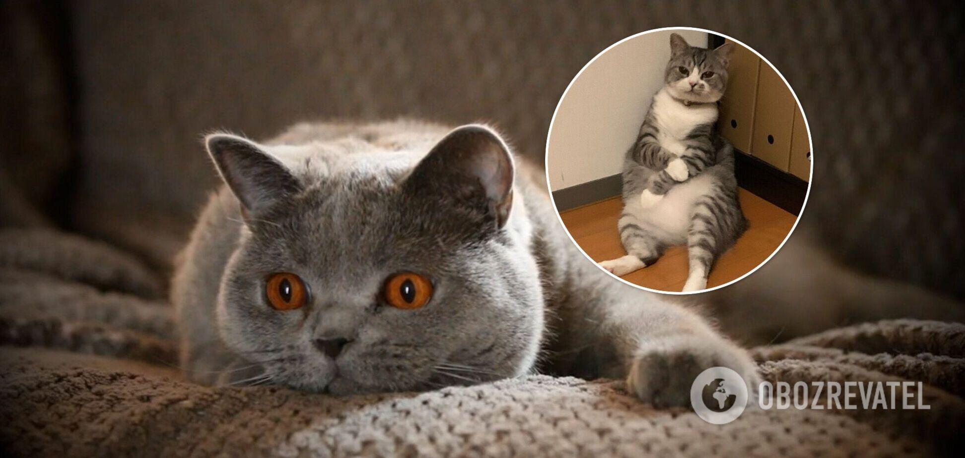 Кот-философ сладко прикорнул и стал звездой мемов. Фото