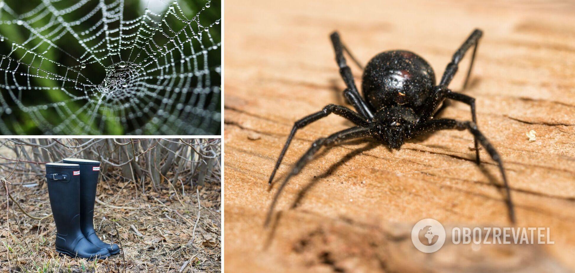 В Україні виявлено павука каракурта: парамедики розповіли, що робити в разі укусу