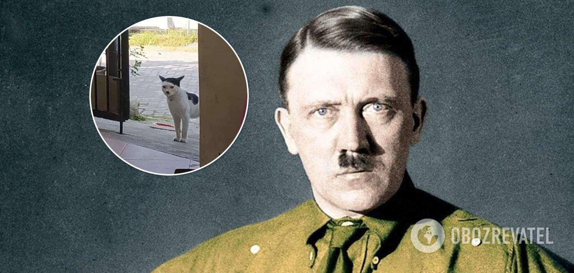 Реінкарнація Гітлера: у мережі знайшли кота з коронними вусиками і чубчиком. Фото