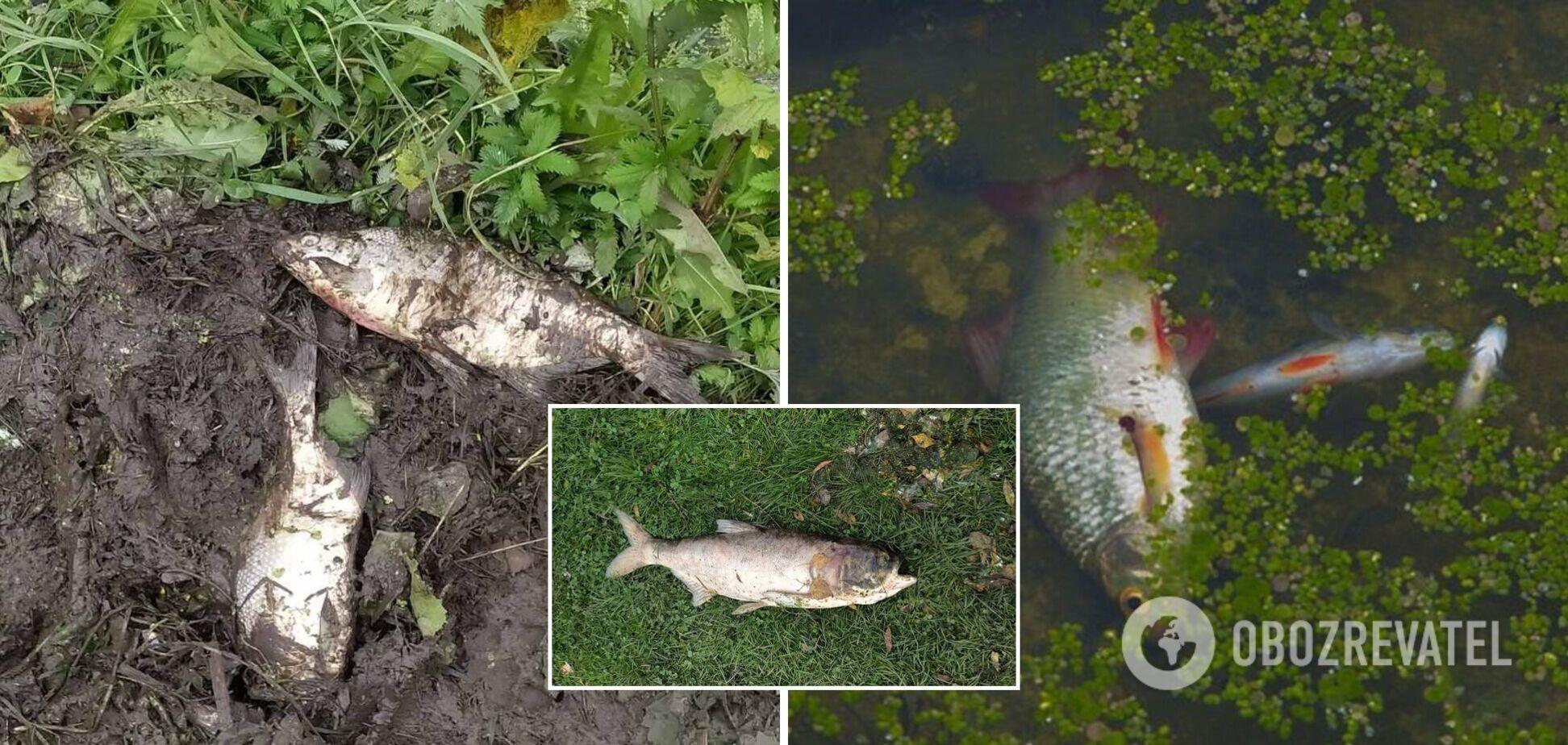 В реке на Хмельнитчине массово гибнет рыба: на воде заметили пятна масла и запах аммиака. Фото