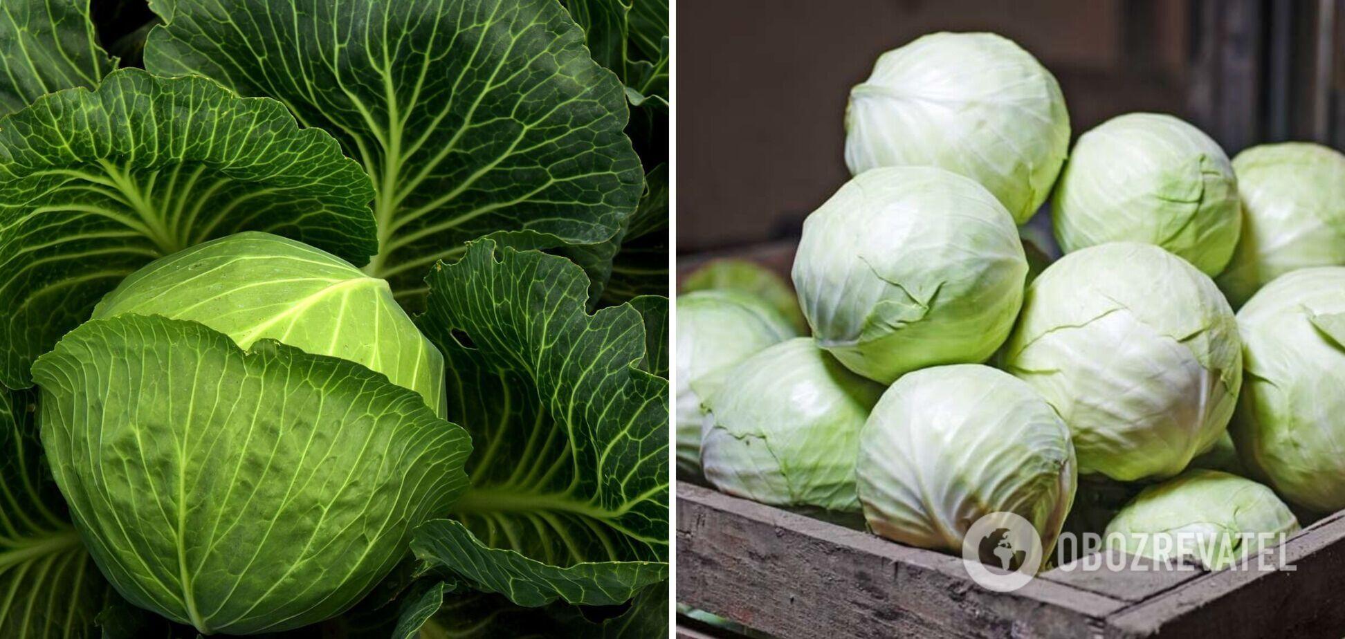 Як правильно зберігати капусту