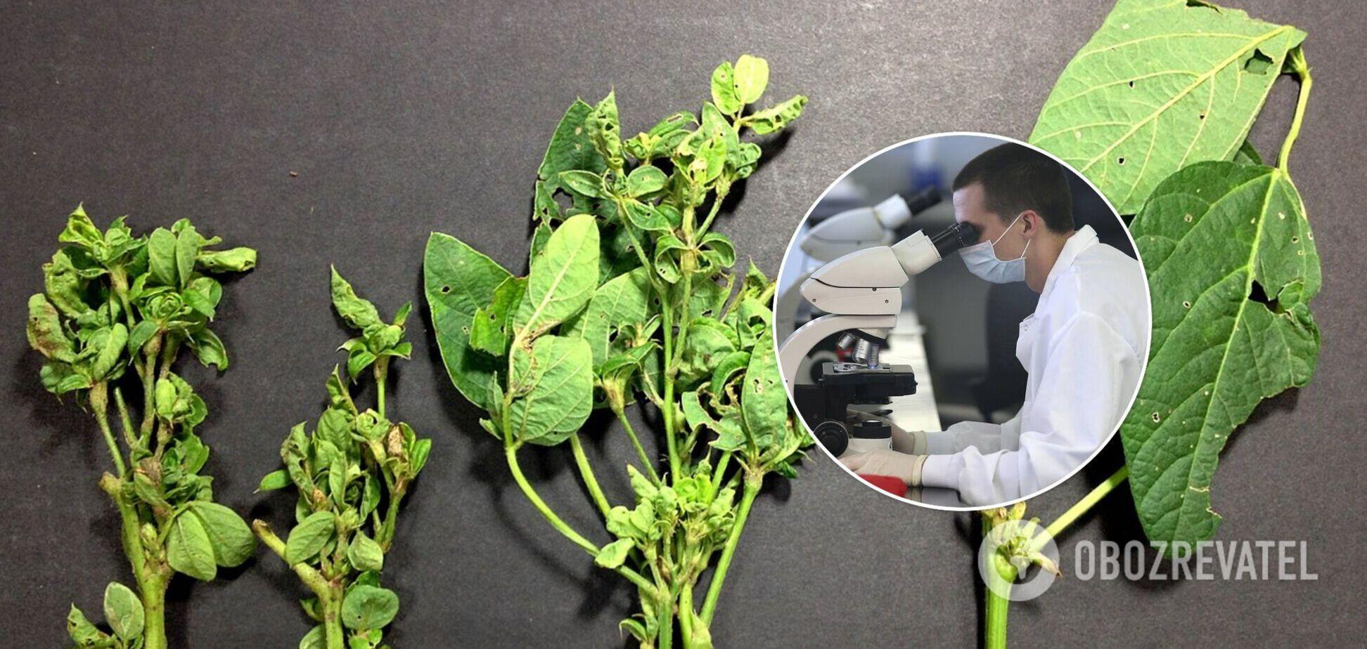 Знайдено молекули, які перетворюють рослини на зомбі