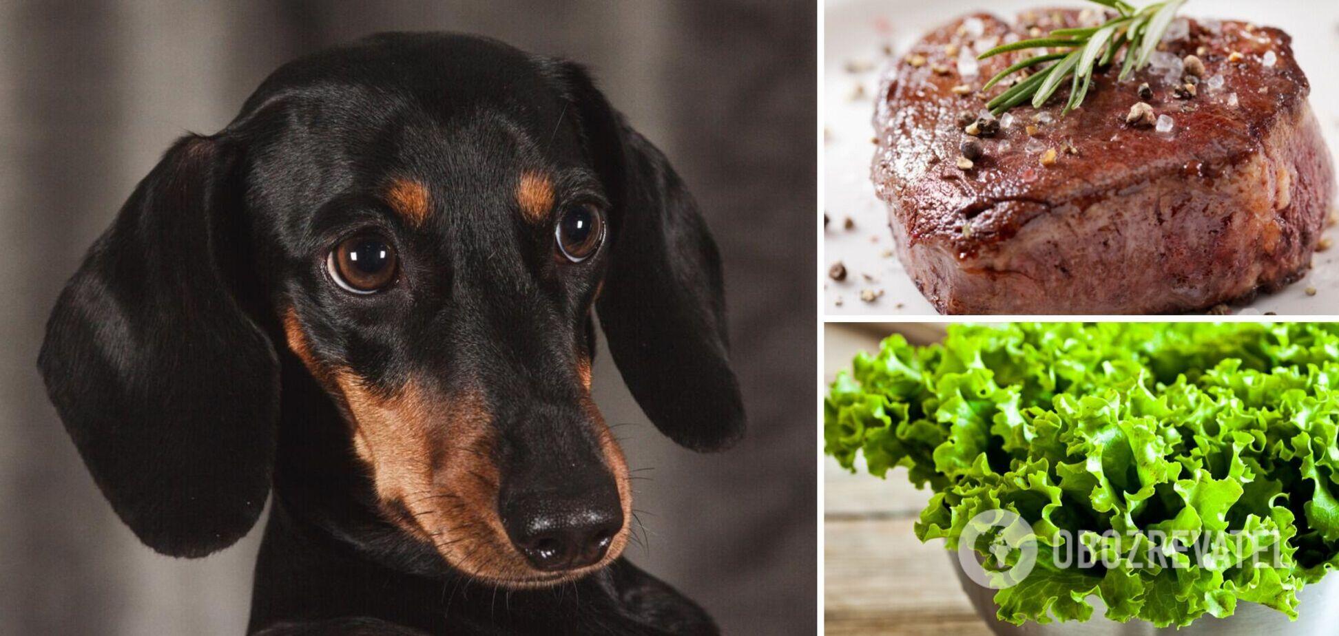 Девушка попала в конфуз, решив, что ее собака – вегетарианка: видео стало вирусным в сети