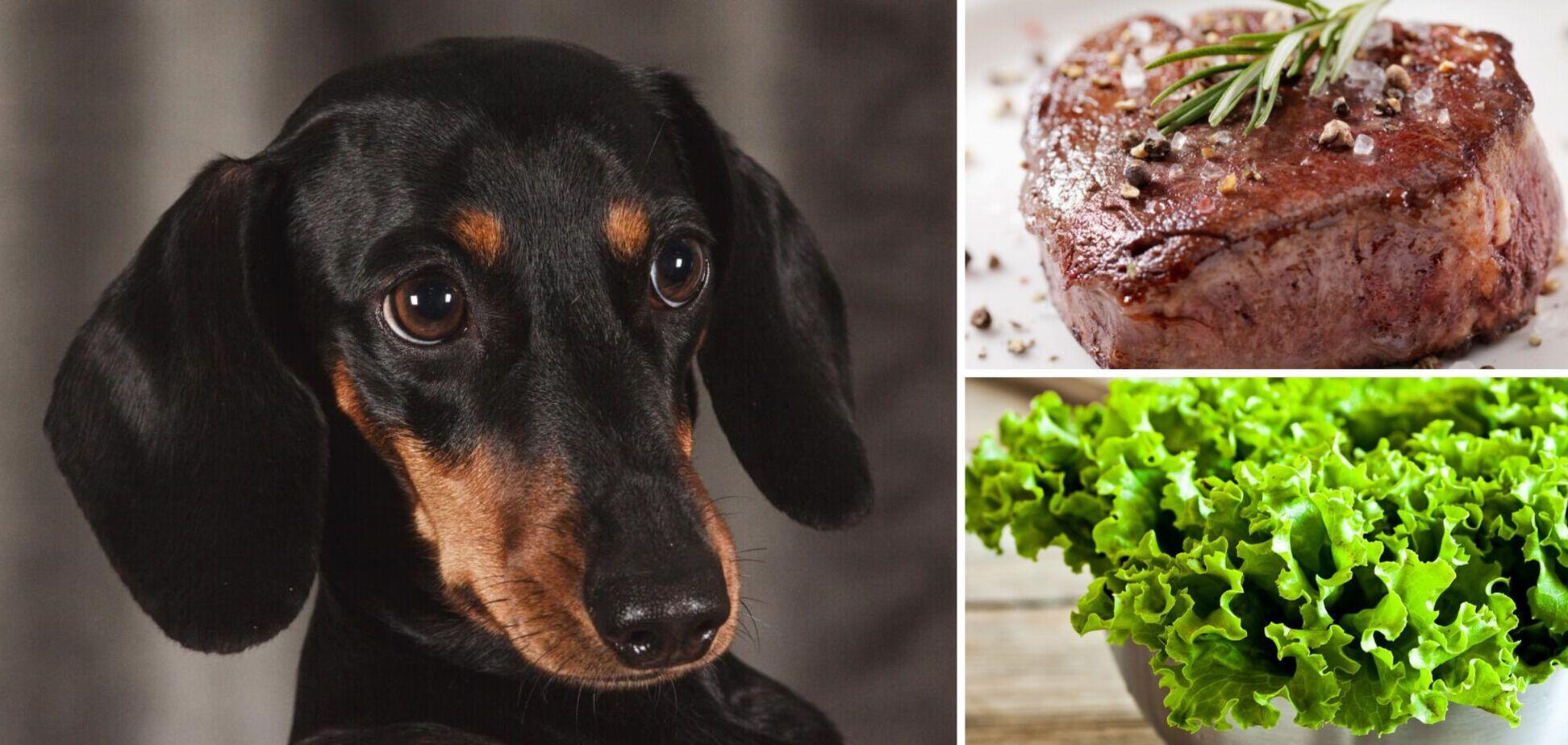 Собака-вегетарианка ест мясо