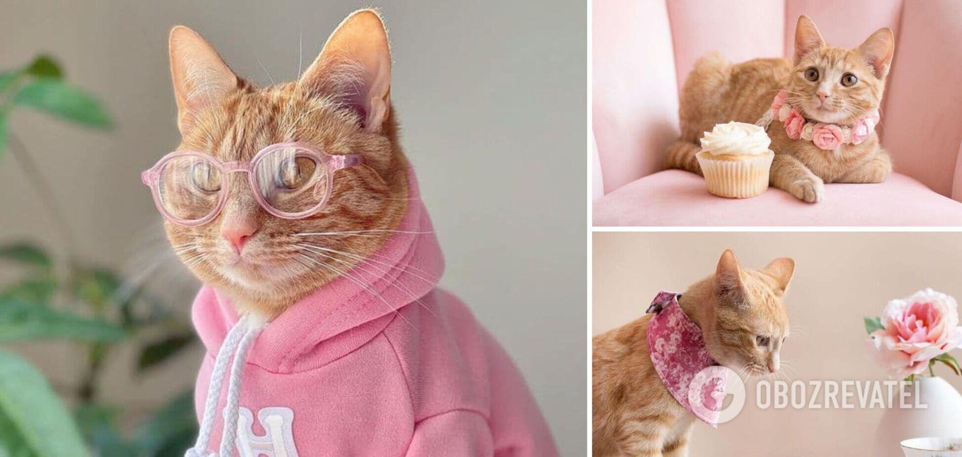 В стиле Пэрис Хилтон: кошка стала звездой сети благодаря своей роскошной жизни. Фото и видео