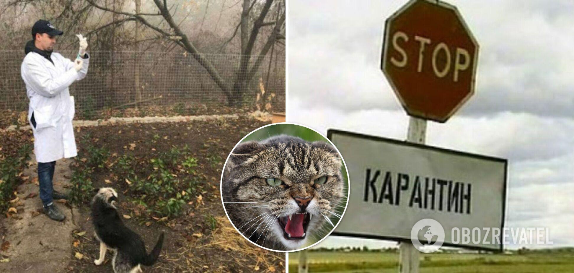 В Тернопольской области из-за нападения бешеной кошки закрыли на карантин целое село