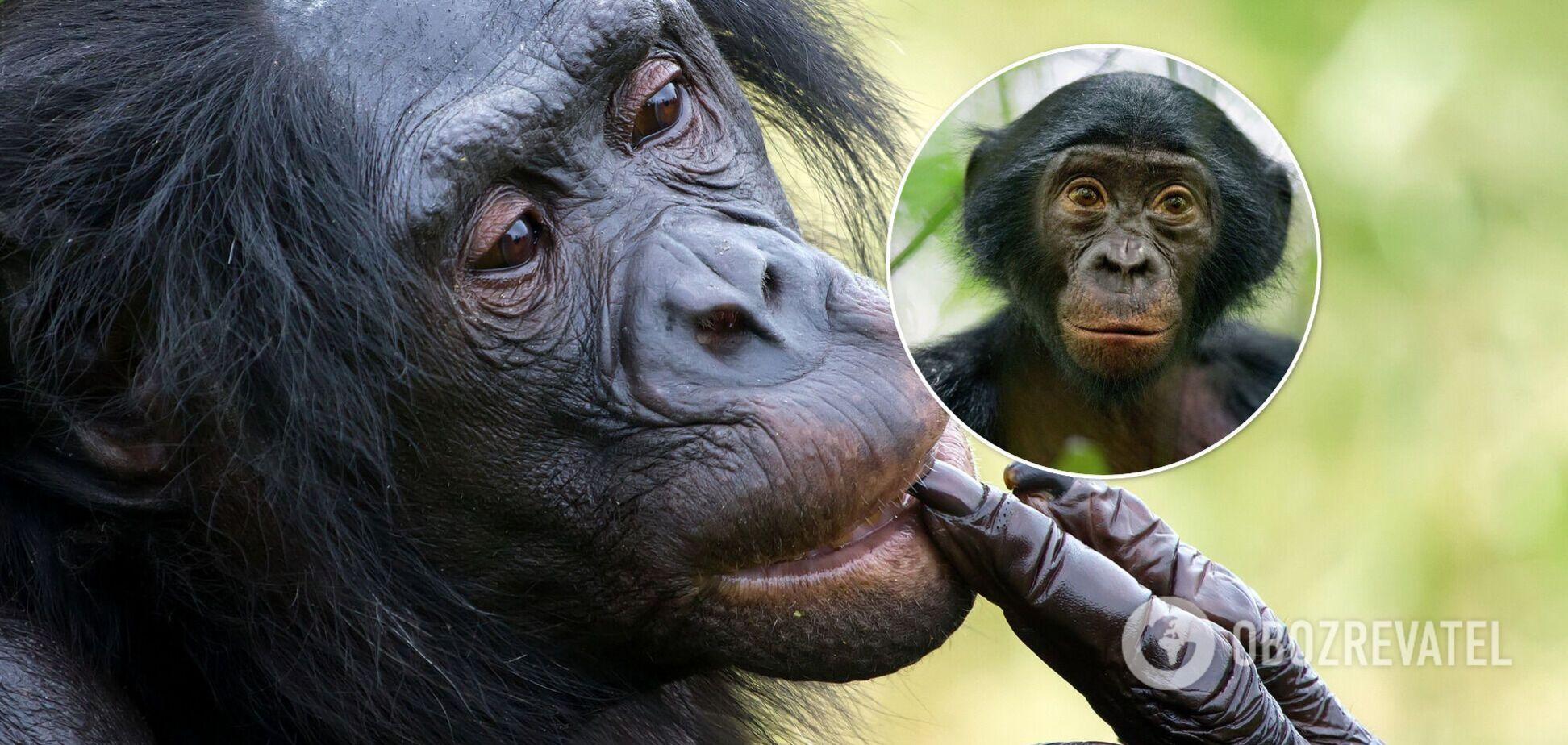 Обезьяны занялись оральным сексом в нью-йоркском зоопарке на глазах у детей. Видео 18+