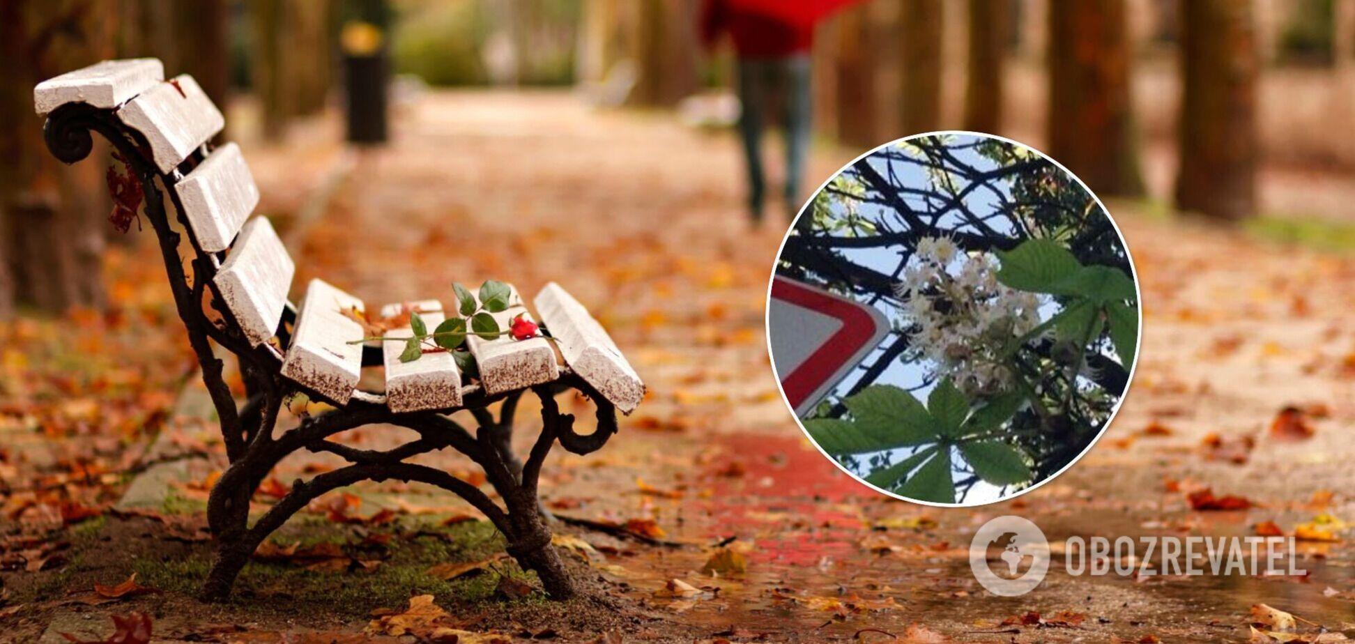Дерево заметили в Голосеевском районе столицы