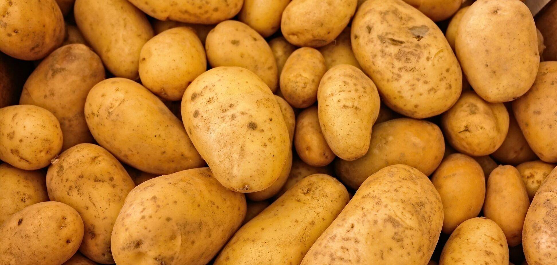 Ціни на картоплю в Україні виростуть