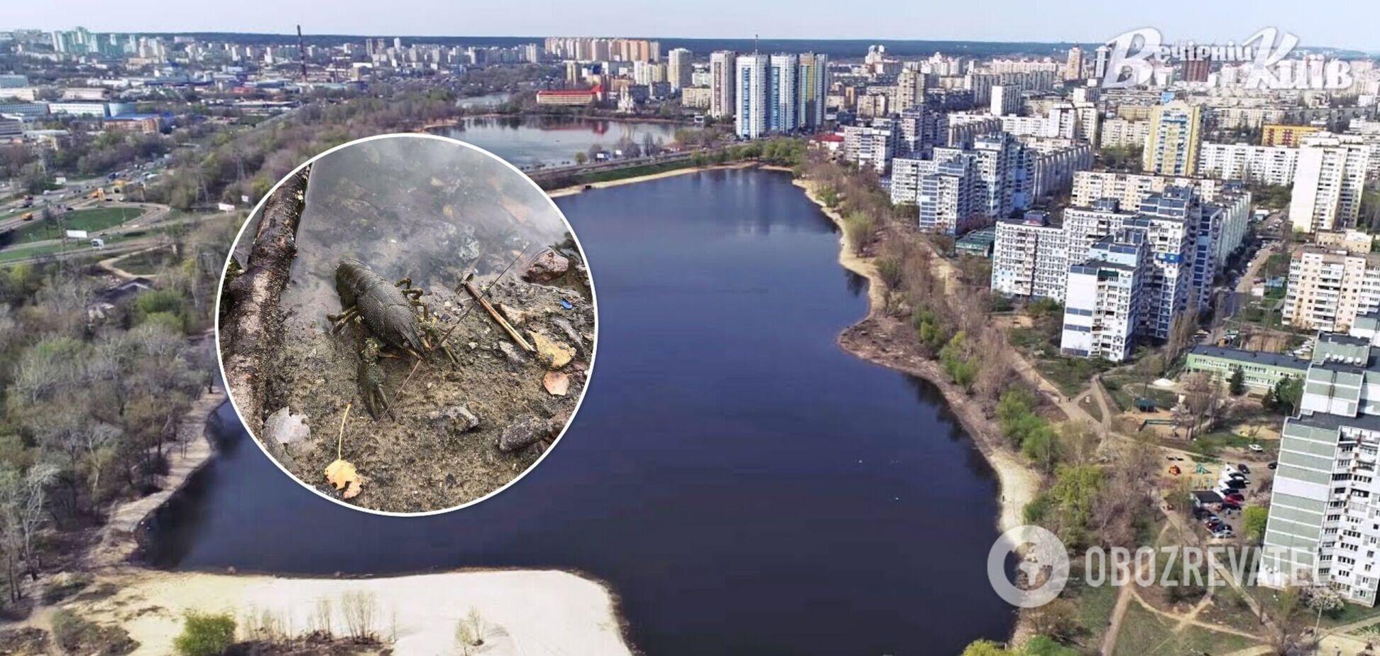 Місцеві жителі підозрюють, що в воду злили якусь хімію
