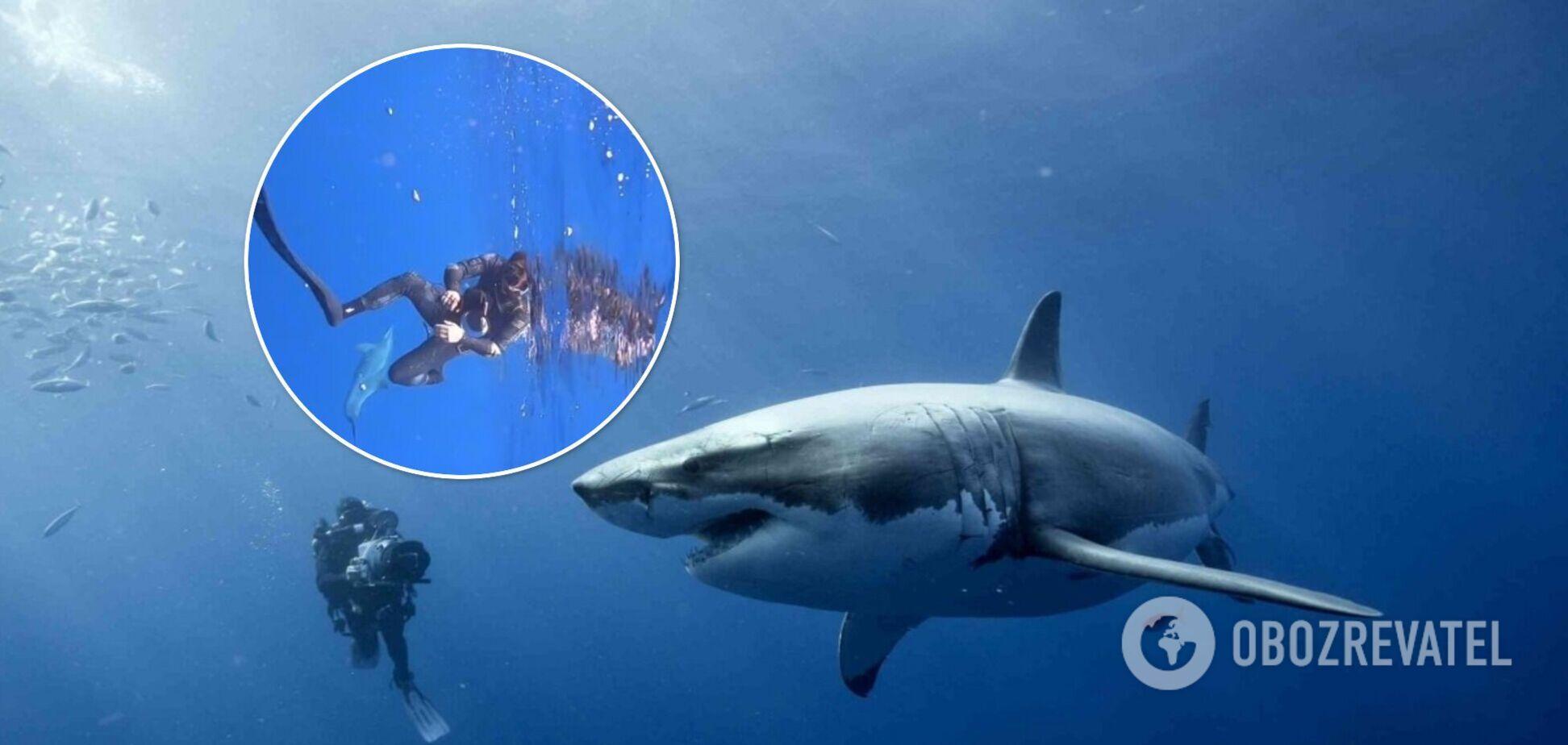 Дельфин спас дайверов от акулы и стал звездой сети. Видео
