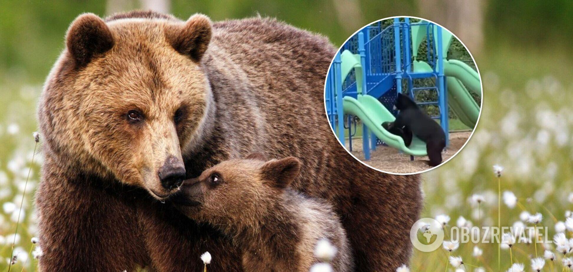 Медвежонок с мамой пришли покататься с горки на детской площадке. Видео