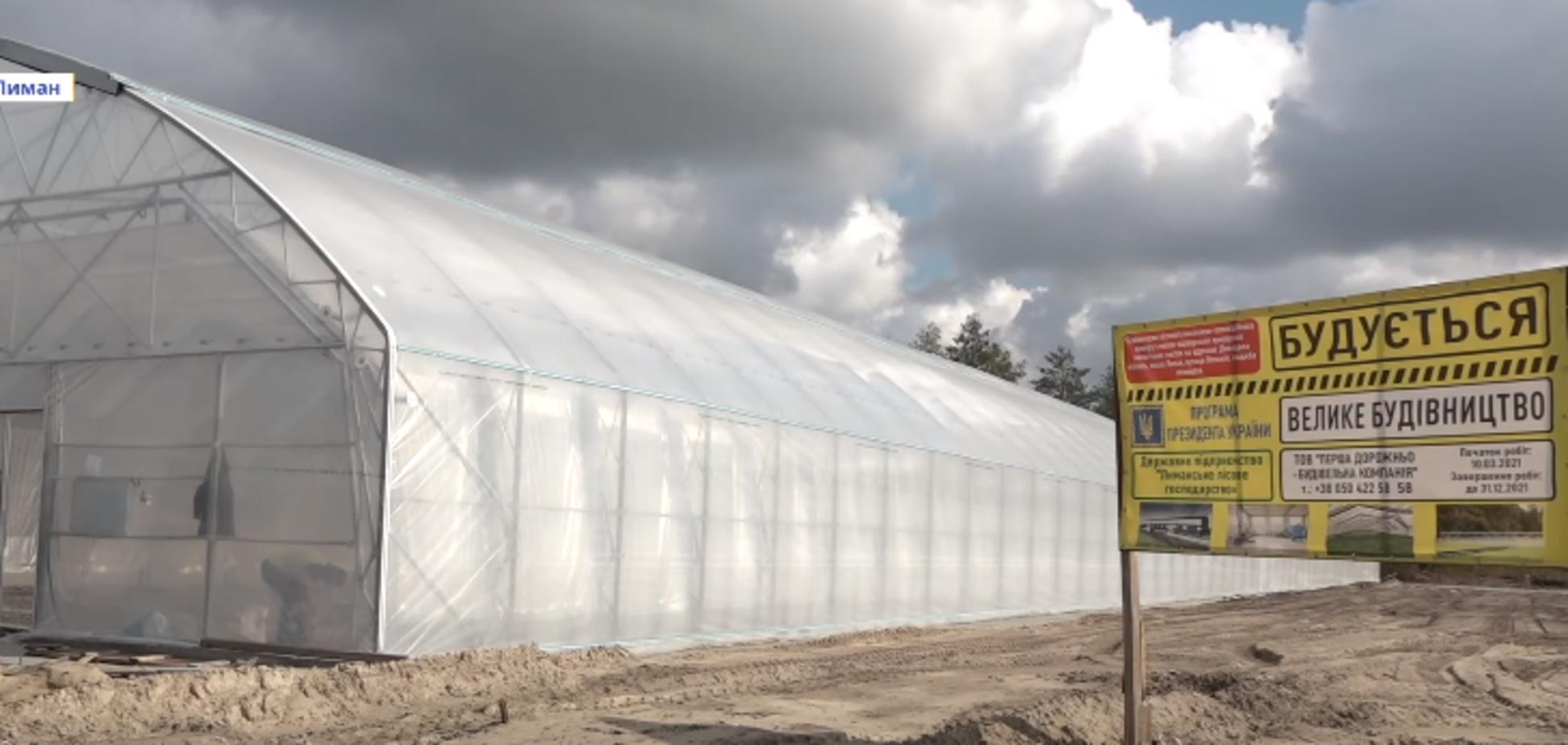 'Большая стройка': на Донбассе создают центр для выращивания 300 га леса ежегодно