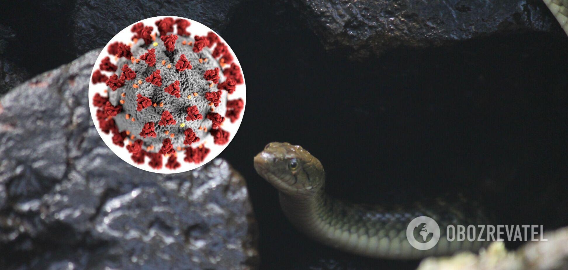 Найден компонент в яде змеи, замедляющий размножение COVID-19