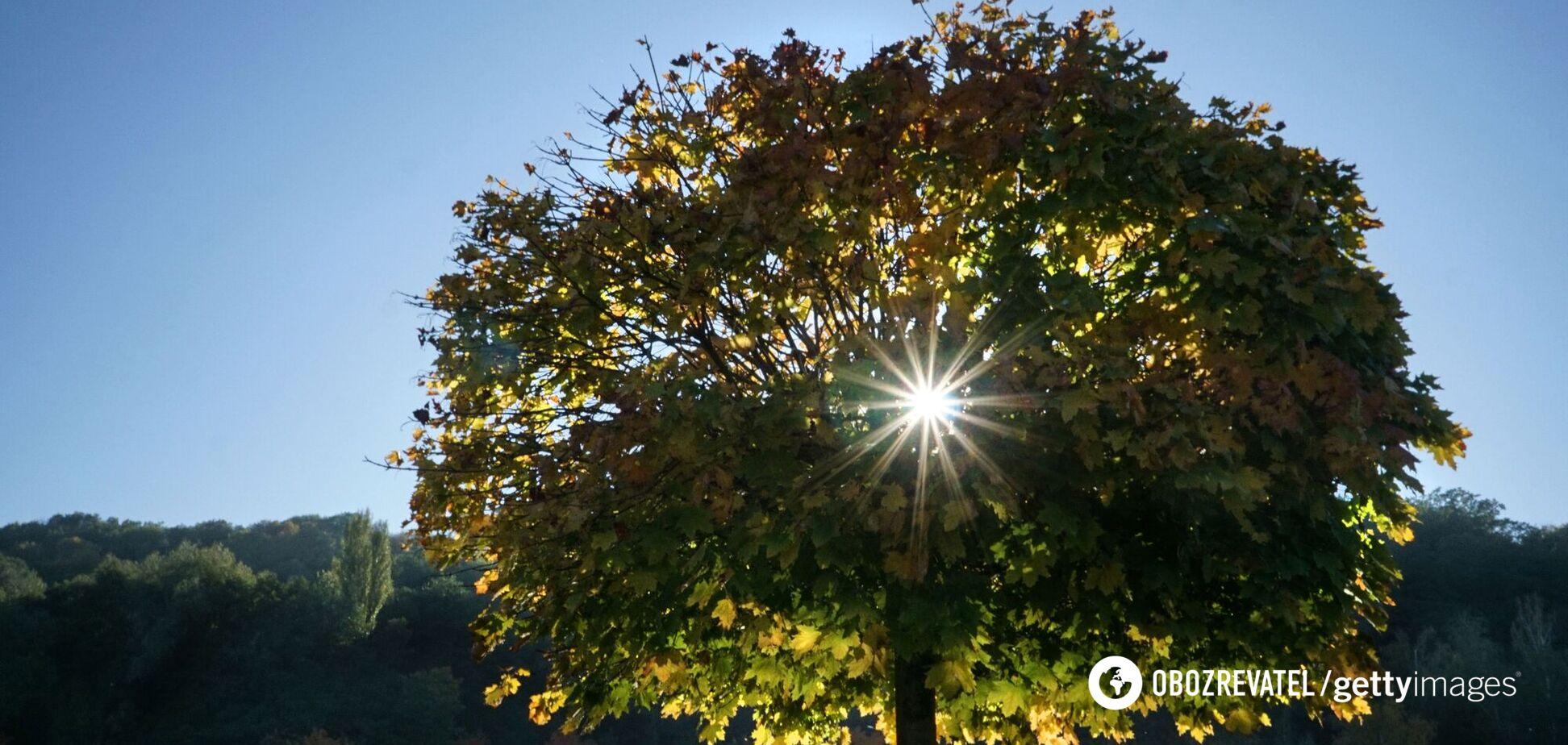 В Украину ворвется тепло до +20: синоптики дали прогноз на начало октября