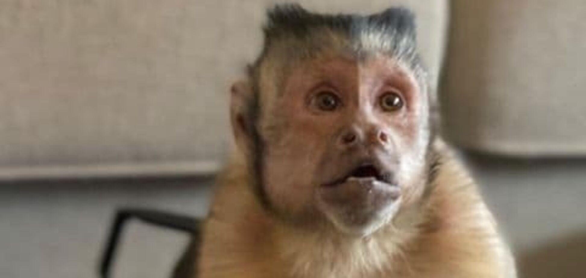 На Бали обезьяны атакуют село в поисках пищи