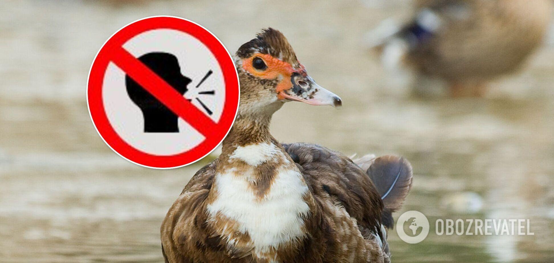 Називала відвідувачів дурнями: в Австралії качка навчилася лаятись. Відео
