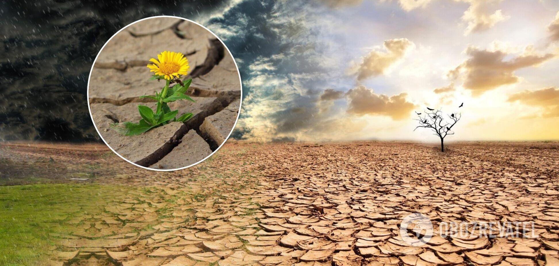 Посуха в Європі
